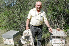 Los apicultores denuncian que la miel de Eivissa corre peligro de desaparecer