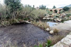 El Ayuntamiento de Santa Eulària licitará una limpieza urgente del río