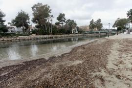 El mal estado del río de Santa Eulària. en imágenes .