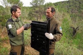 El Ibanat coloca trampas para evitar las plagas de insectos por la DANA
