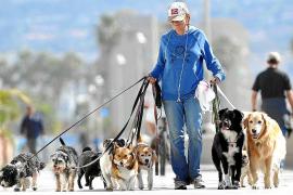 Cort estudia analizar el ADN de las heces caninas para multar a los dueños