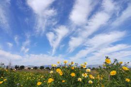 Estampa típica de un día de primavera en Mallorca