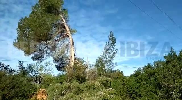 Los bomberos extinguen un incendio en Sant Carles originado por la caída de un poste de la luz