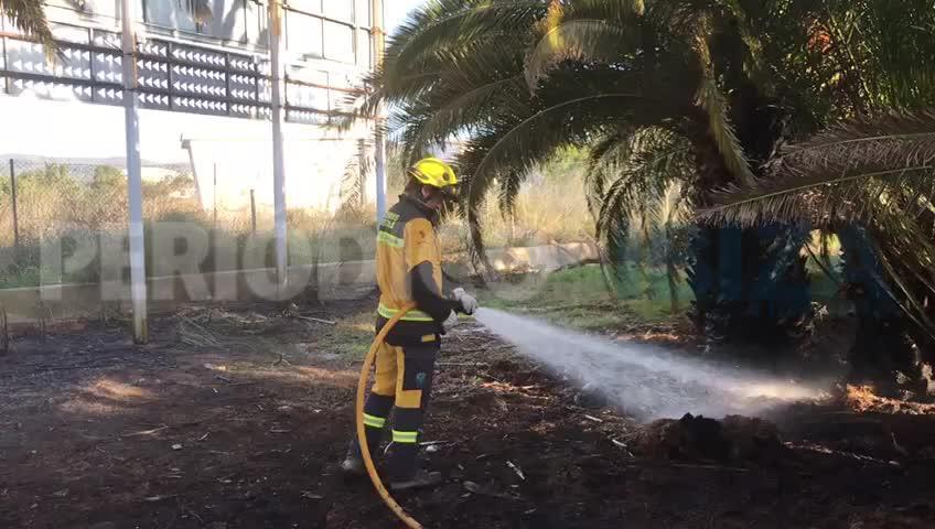 Un aparatoso incendio calcina un vivero de palmeras en Ibiza
