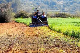 El Consell ha recibido solicitudes por valor de 250.000 euros para recuperar tierras de cultivo