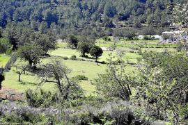 """El Observatorio de Sostenibilidad de Ibiza reitera la """"necesidad"""" de rentabilizar el aprovechamiento maderero"""