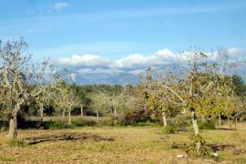 La calidad del aire mejora un 50% en Baleares con el confinamiento