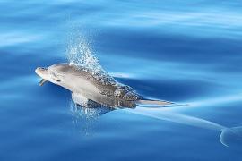Viento de cola para el proyecto sobre el ruido submarino y los delfines