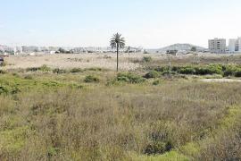 El Ayuntamiento de Ibiza pidió sin éxito incluir Ses Feixes en el decreto ley de protección del territorio