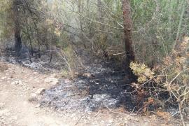Un incendio afecta una zona de pinar en Sant Antoni