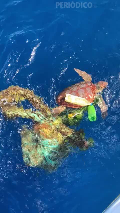 Rescatada una tortuga atrapada entre cuerdas y plásticos en Ibiza
