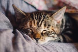 ¿Por qué a los gatos les gusta tanto meterse dentro de cajas?