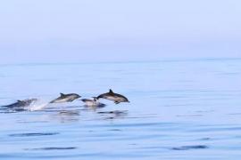 Charla sobre el proyecto de investigación de los delfines de la Asociación Tursiops