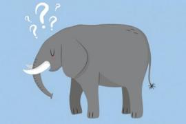 ¿Es posible conseguir una memoria de elefante?