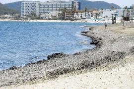 Hoteleros, vecinos y comerciantes critican el «pésimo» estado de las playas de Vila
