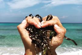 Rafa Ruiz defiende en redes sociales que la posidonia muerta en las playas «no es suciedad»