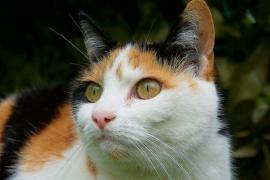 Un gato sobrevive a 12 minutos de lavadora en funcionamiento