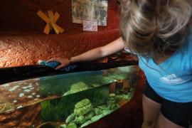 30 años de acuario y una vida dedicada al cuidado del mar pitiuso, en imágenes