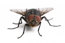 ¿Cómo acabar con las moscas de la humedad?