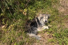 La Policía Local de Sant Antoni rescata a un perro de un 'safareig'