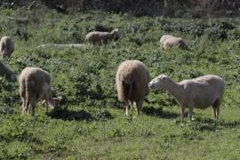 Reclaman a la Conselleria de Agricultura una línea de apoyo a las cooperativas