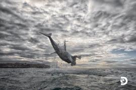Captan el salto más extraordinario jamás registrado de un tiburón blanco