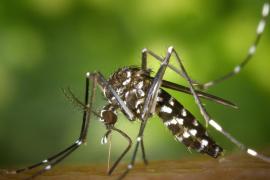 Identifica los cinco bichos peligrosos más comunes y sus picaduras