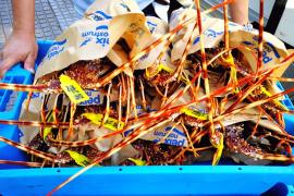 La Cofradía de Pescadores de Ibiza factura 80.000 euros más que en 2019
