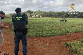 La Guardia Civil refuerza el control para evitar el robo de algarrobas
