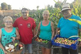 Cultivando la salud y la amistad en Can Picafort