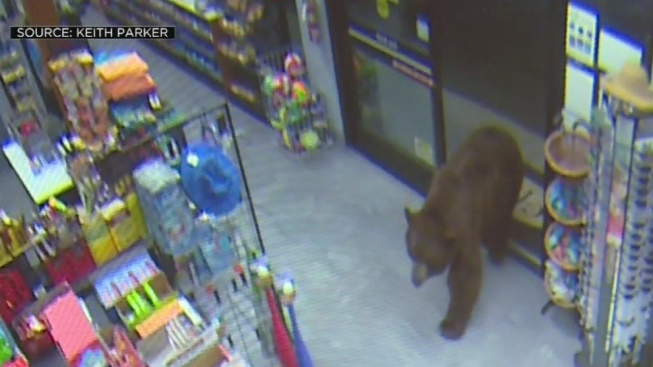 Unos osos pardos 'asaltan' varias gasolineras y se dan un banquete de chucherías