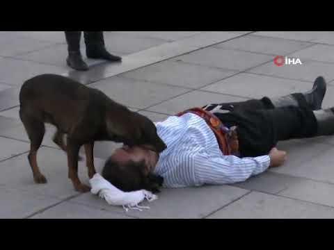 Un perro callejero interrumpe una 'performance' y auxilia al actor 'herido'