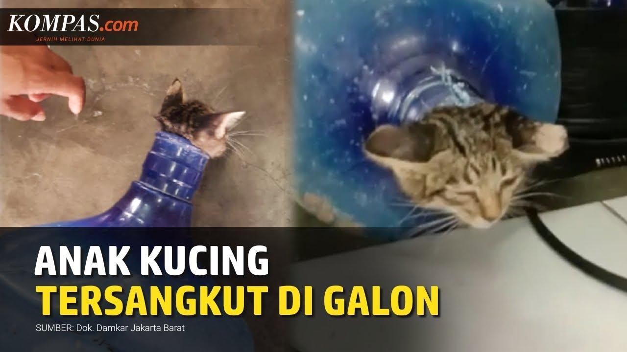 Angustioso rescate de un gato metido en un garrafón de agua