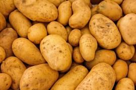 La OCU alerta de los tóxicos de los brotes o zonas verdes de las patatas