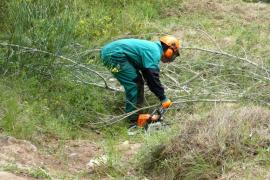 Endesa invierte 145.195 euros en la limpieza de las líneas de distribución en zonas boscosas pitiusas