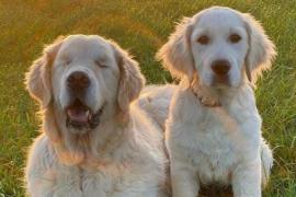 La bonita historia de Tao, el perro ciego que tiene su propio perro guía