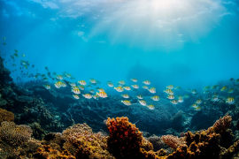 El Palma Aquarium cierra en respuesta a la situación creada por la pandemia