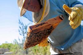 Menú de verano para salvar las abejas