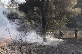 Sobresalto en Puig d'en Valls por un incendio declarado en una pinada