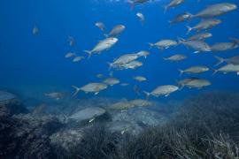 Es Freus la zona con más denuncias por pesca ilegal de raor y verderol