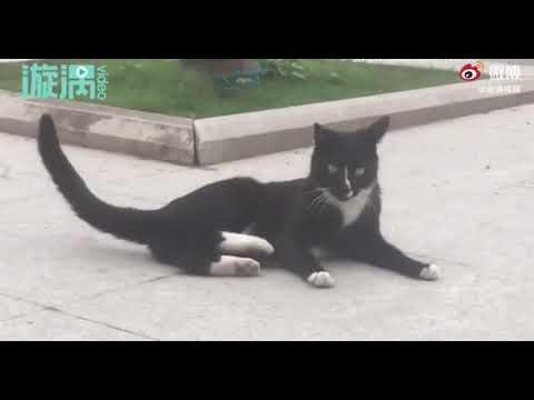 El curioso vídeo donde un gato y un ratón se hacen 'amigos' tras una persecución