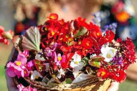 Más que belleza en las flores de Eivissa