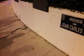 Capturada una serpiente de metro y medio en Ibiza