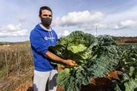 Promoción para la col 'pagesa' dentro de la campaña 'Això Sí és d'Eivissa!'