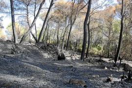 Un extrabajador forestal se confiesa autor de siete incendios en Mallorca y Menorca