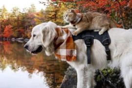 Samson y Cleo, un perro y una gatita compañeros de aventuras inseparables