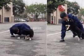 El tierno beso de un cachorro a un bombero que ha enamorado a internet
