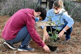 Formentera 'cultiva' derechos en el Día de la Discapacidad