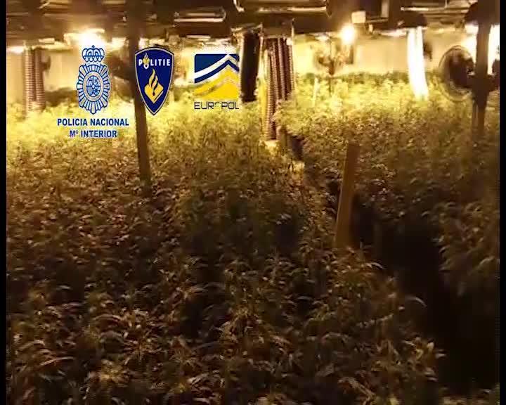 Intervienen marihuana valorada en un millón de euros al grupo que blanqueaba dinero en Ibiza
