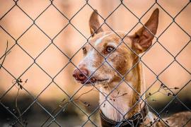 Ibiza4Patas da una nueva vida a 45 'cans eivissencs'